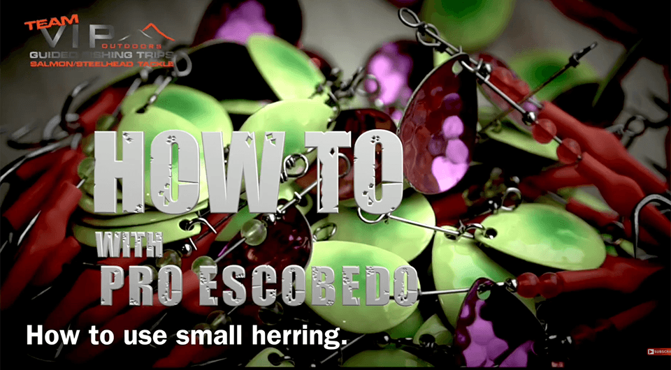 how to use orange label herring